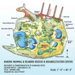 Island White – A Marine Mammal & Seabird Rescue Center